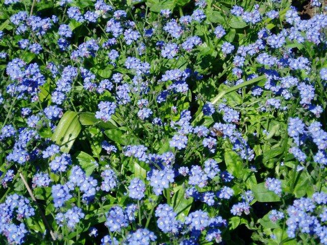 Крым. Никитский ботанический сад. E5a231aeb2ab