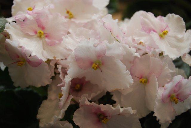Международая выставка «Цветы.Ландшафт .Усадьба 2010» Астана - Страница 3 A058b448e1ef
