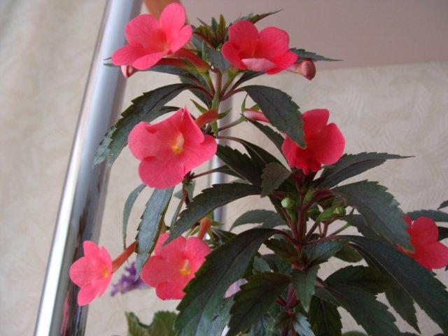 Мои цветочки - Страница 2 D84b25b34879