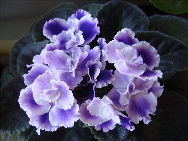 Весеннее  цветение (Хваст от Веры) - Страница 6 Eb5ce69b78e7