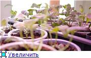 Цветы - Страница 2 Da3c4dc1f4cft
