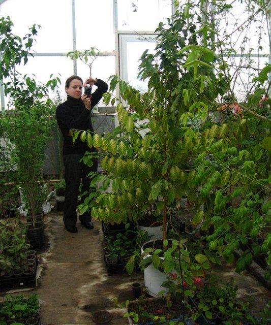 Растения из Нижегородской оранжереи 899ec223305a