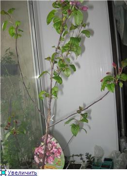 Яблоня: сорта и агротехника. 21a3a0ad6dd2t