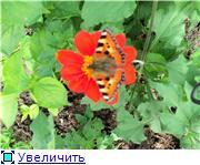 Лето в наших садах - Страница 5 Fbc6c81f3552t