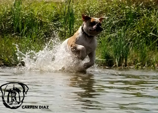 Собаки питомника Carpen Diaz - Страница 2 95106c2ee5e0