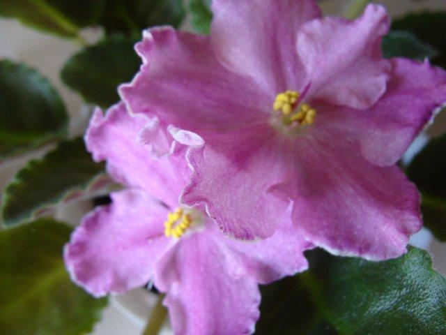 Мои цветочки 93c5ce08a4c5