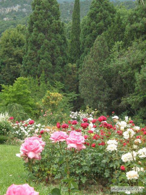 Крым. Никитский ботанический сад. - Страница 2 F33acda23478