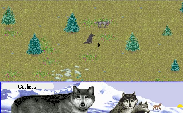 Wolf                  54014b582657