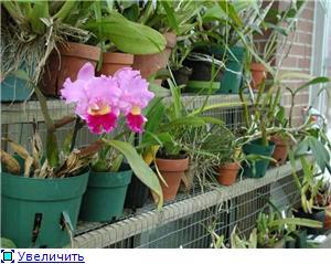 Размещение орхидей Ef4cf65d2da3t