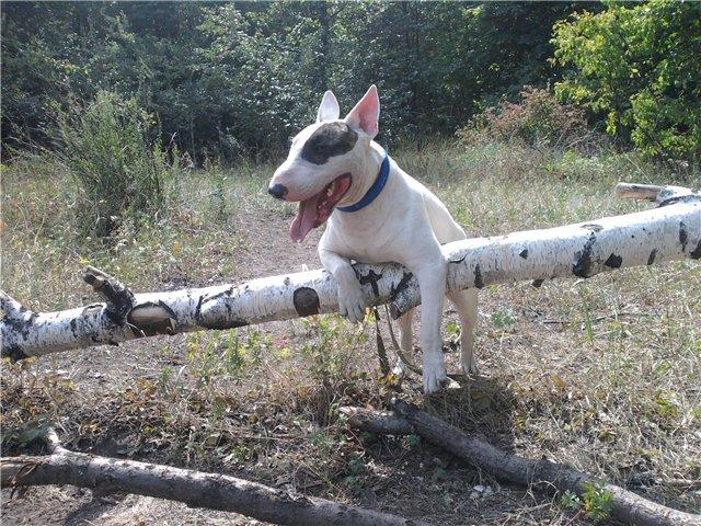 Собака-праздник! Сегодня и каждый день на арене Жоринька!!! - Страница 2 Eb363828c410
