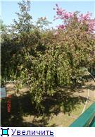 Помогите опознать растение. D35fe26bba1ft