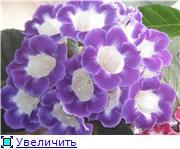 Семена глоксиний и стрептокарпусов почтой - Страница 2 7a41e07f9f0ft