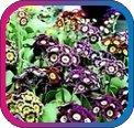 продам семена экзотических растений - Страница 3 2636ecda87b2
