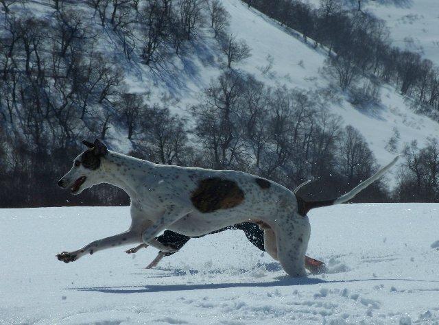Грейхаунд  ARTEFAKT Triumph of EDELEN - Грато (Grato) 0337050d6e25