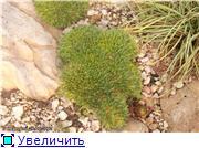 Cад Людмилы Ивановой из черкасс Fa85e20f6c6bt