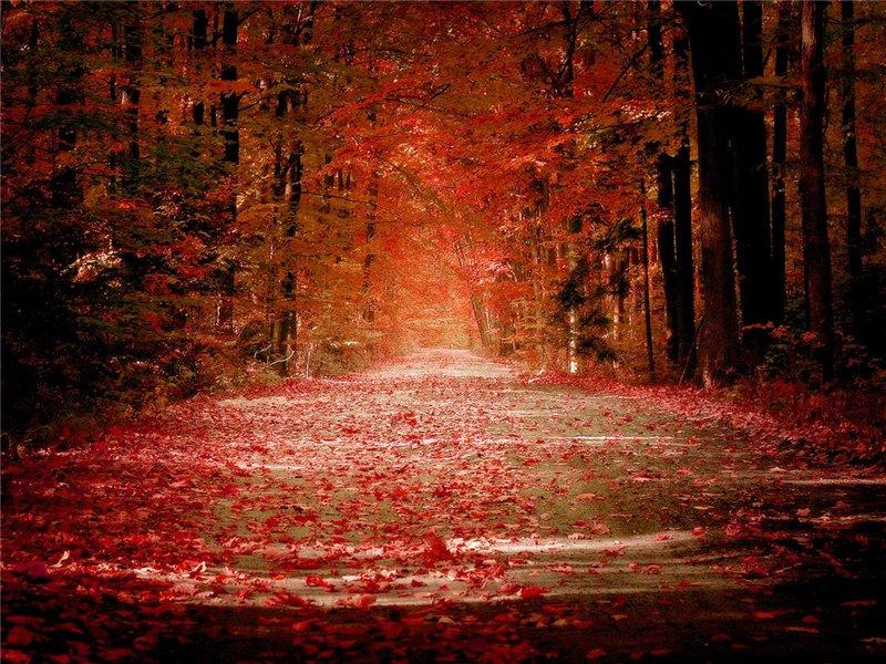 ბუნების ლამაზი ფოტოები 6a0ba9b4cc6a