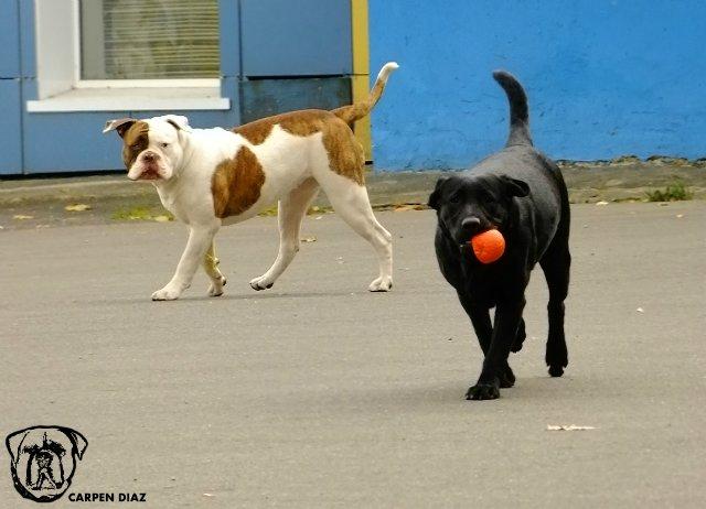 Собаки питомника Carpen Diaz - Страница 2 A7be66335f1f