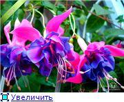 ФУКСИИ В ХАБАРОВСКЕ  - Страница 2 D61c9ecdbe64t