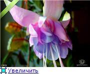 ФУКСИИ В ХАБАРОВСКЕ  - Страница 2 E86e149b40ebt