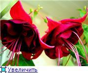 ФУКСИИ В ХАБАРОВСКЕ  - Страница 2 A423532e68e7t