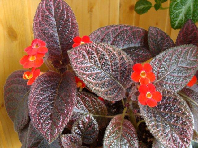Мои цветочки - Страница 20 1e27caa46eb1