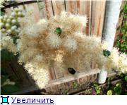Лето в наших садах - Страница 5 7ffedecc46aat