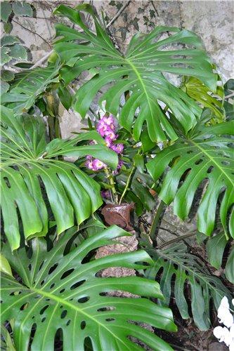Выставка орхидей Никитского ботанического сада D69da54b9e5a