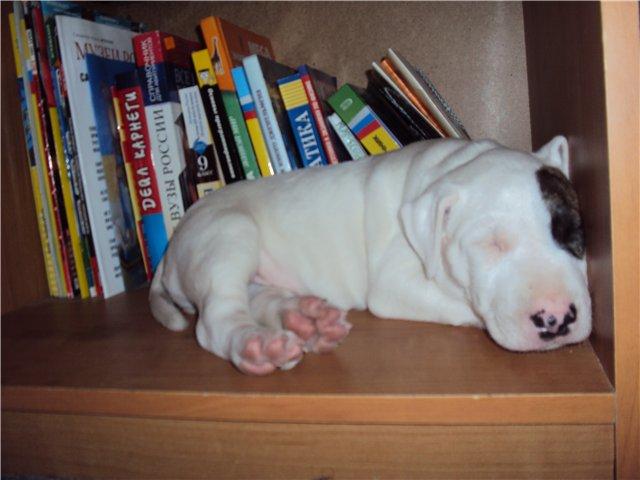Собака-праздник! Сегодня и каждый день на арене Жоринька!!! D16ddbe37605