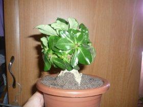 продам семена экзотических растений 9170a24b5b2e