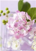 Цветы (flowers) 30f083576abft