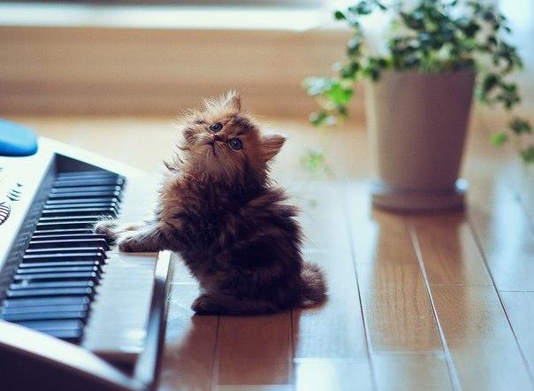 Maji svatki za gnjaviti...[Ne zamerite mi...] - Page 2 Kitty-cute-piano-Favim.com-481060