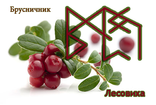 "Став ""Брусничник"" Автор: Лесовиха 9d5482f507829e105318a521dca35afa"