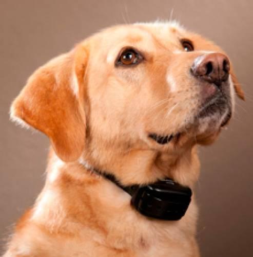 """Интернет магазин товаров для собак """"Волча"""" 00b7ba1c28ebab6756ceb5d1a00f8e05"""