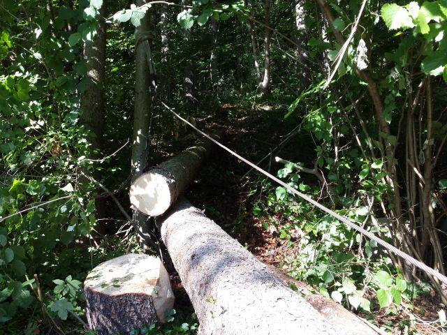 Izrada ogrijevnog drva - Page 2 21760795