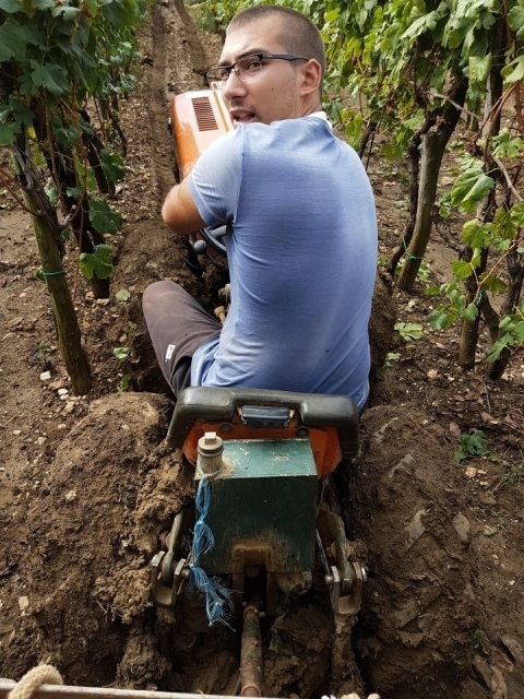 Radovi & poslovi u vinogradu - Page 5 23344000