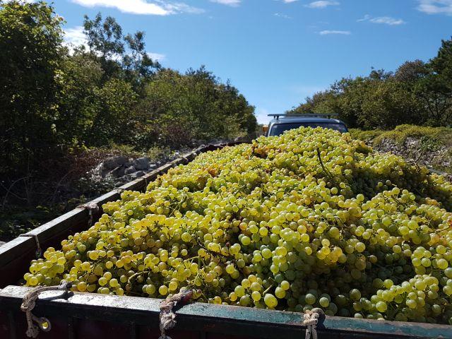 Radovi & poslovi u vinogradu - Page 5 23344002