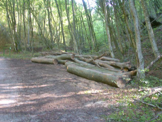 Izrada ogrijevnog drva - Page 4 21979245