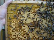 Pčelarstvo     - Page 3 545115_466217836728395_2027853200_n