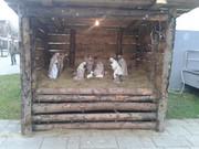 Mali sajam & izložba životinja 20151215_145346