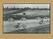 Agrar & selo u sjeni prošlosti - Page 2 Z10