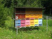 Pčelarstvo     - Page 3 1939991_961505267199647_3376821547400037549_n