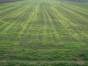 Sjetva pšenice DSC00671