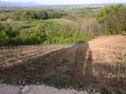 Sadnja novog vinograda 11167803_1434143253566383_7643830782089613786_n