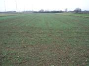 Sjetva pšenice DSC00721