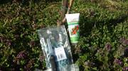 Razmnožavanje sadnica voća cijepljenje-kalemljenje voća  13906_1600447376834163_4020842212074609305_n
