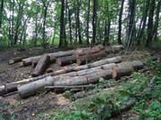 Izrada ogrijevnog drva - Page 13 DSC09522