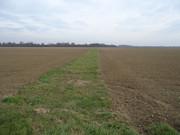 Sjetva pšenice DSC00696