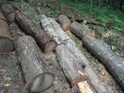 Izrada ogrijevnog drva - Page 13 DSC09521