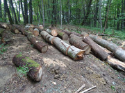 Izrada ogrijevnog drva - Page 13 DSC09519