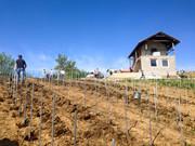 Sadnja novog vinograda 1013849_1433925863588122_3559894506414492601_n